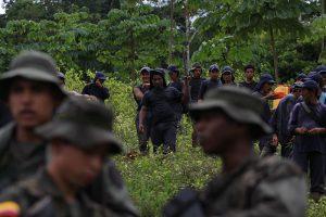 Zerstörung von Koka-Anpflanzungen außerhalb des traditionellen Gürtels
