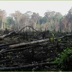 Deforestation Mexico  Bild (Ausschnitt): ©  Blatant World [CC BY 2.0]  - flickr