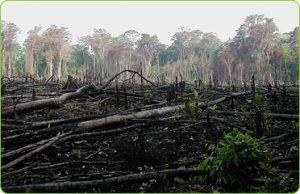 Deforestation Mexico