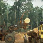 Abholzungsarbeiten im Regenwald  Bild (Ausschnitt): © Rettet den Regenwald e.V. (Rainforest Rescue) [CC BY-NC-ND 2.0]  - flickr