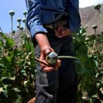 US-Versagen Das Versagen von Antidrogenmaßnahmen der USA führte zum jetzigen folgenreichen Opium-Boom. | Bild (Ausschnitt): ©  United Nations Photo [CC BY-NC-ND 2.0]  - Flickr